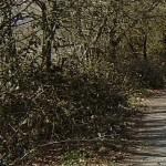 sendero peatonal en mos